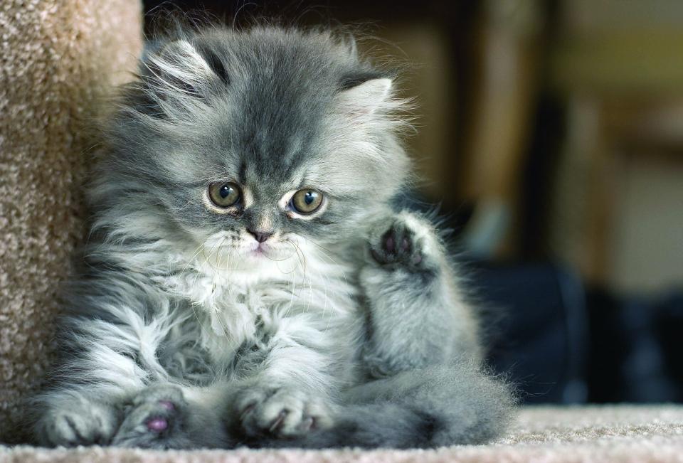 Котенок1